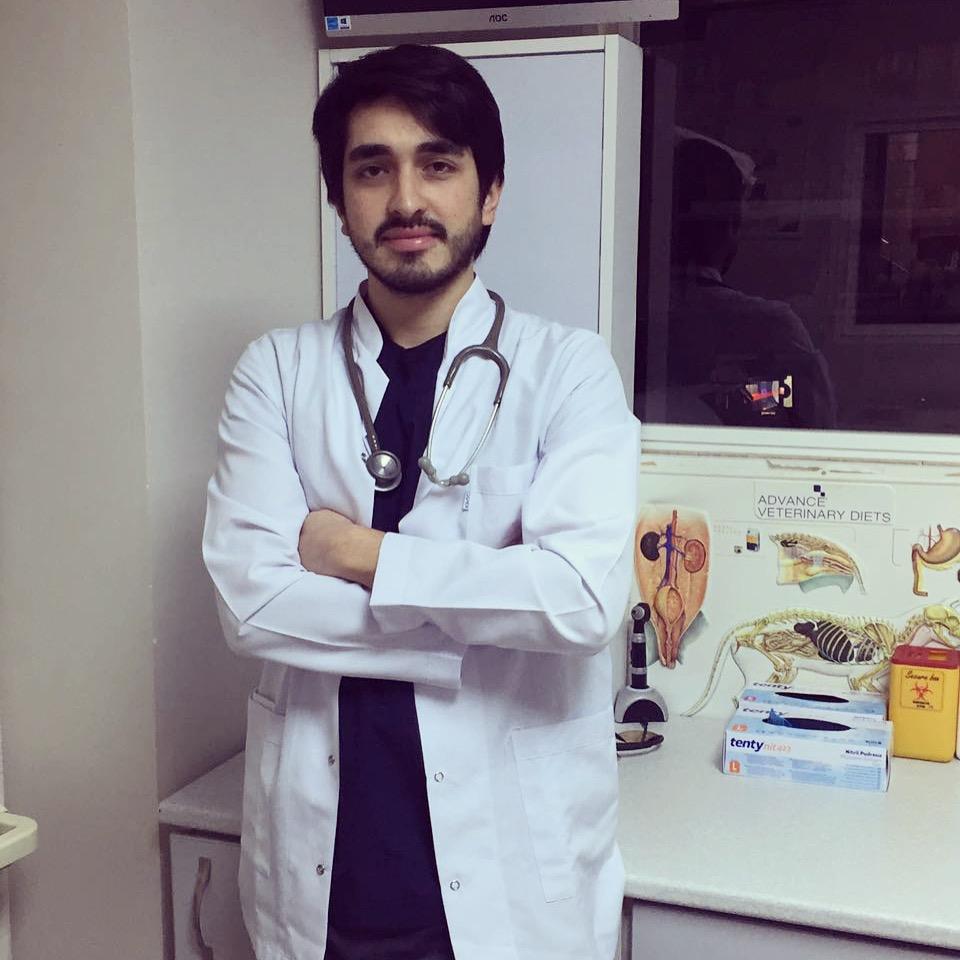 Modern bir veteriner kliniği nedir Durum-Vet - her durumda ve her zaman profesyonel yardım