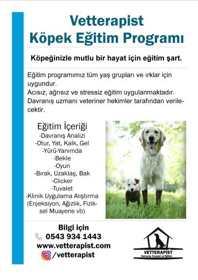 Köpek Eğitim Programı Broşür