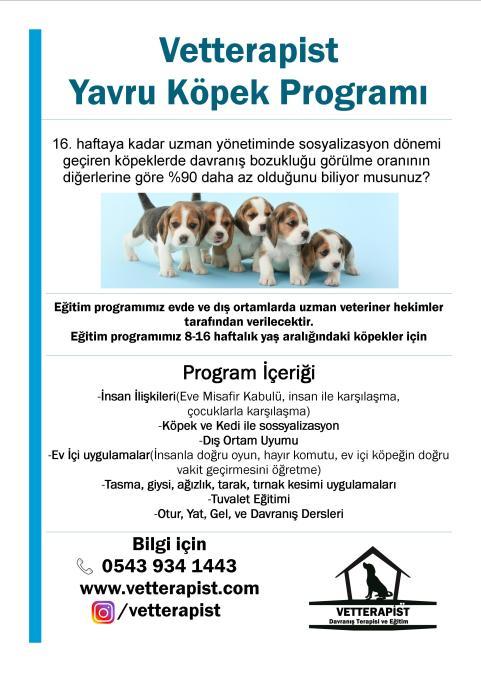 Yavru Köpek Programı Broşür